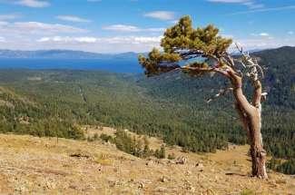 Alpine Meadows & Alpine Peaks